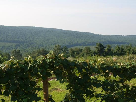 Orrtanna, PA: The view from our tasting room