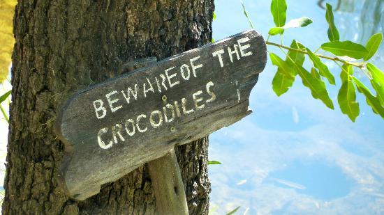 Camp Xakanaxa: sin comentarioss !!!! Los cocodrilos estaban todos los dias !!