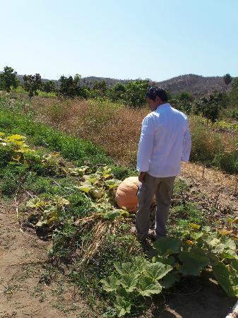 Los Tamarindos: checking out the organic garden