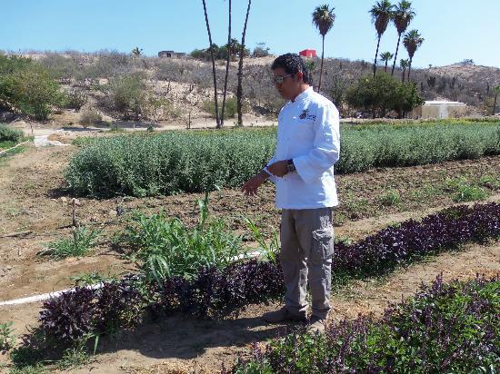 Los Tamarindos: The farm
