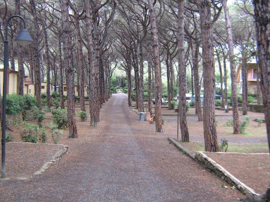 Le Esperidi Village : Campeggio e piazzole 3