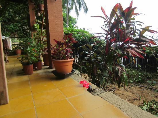 El Jardin Yelapa : El jardín