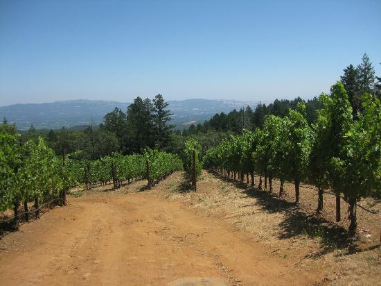 VGS Chateau Potelle : view form the vineyard to the Napa Valley below