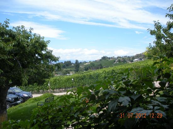 Hillside Winery: Beautiful vista's
