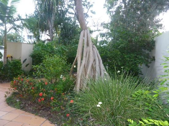 Mirra Chana Apartments - on the Spit Mooloolaba: Garden