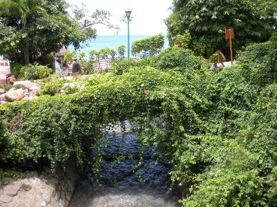 Hyatt Ziva Puerto Vallarta : Beau paysage sur le site de l'hôtel.