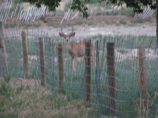Klondike Ranch: TONS of wildlife - white tail and mule deer, pronghorn, turkeys