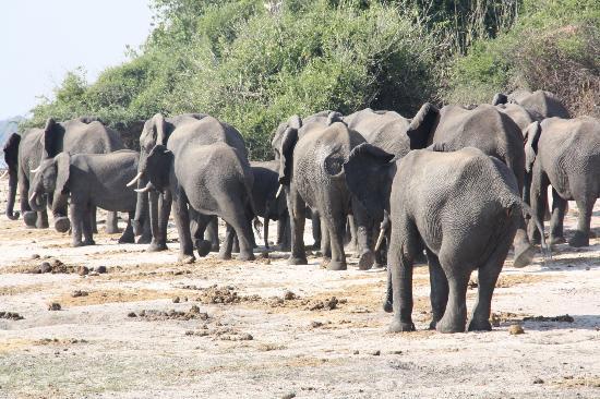 Wild Wings Safaris: _