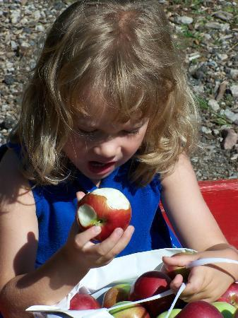 Charlotte, MI: Apple Picking & Sampling