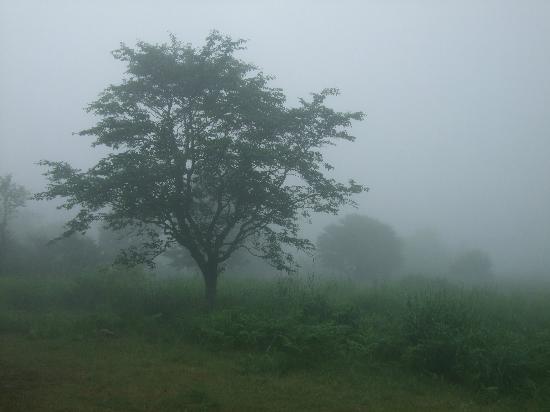 Appi Grand Villa 3: ブナ2次林の遊歩道から