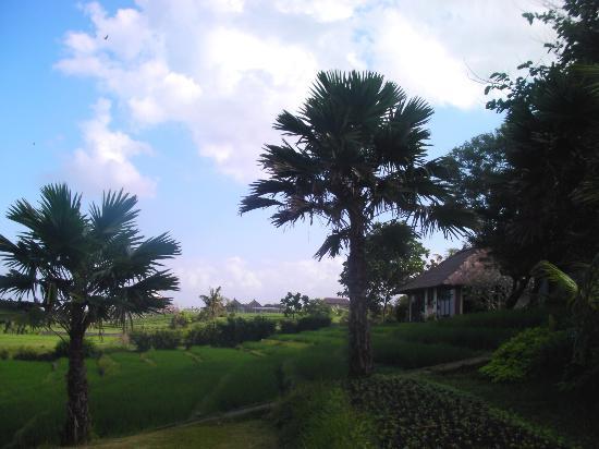 Un Bungalow Picture Of Bali Wisata Bungalows Tabanan