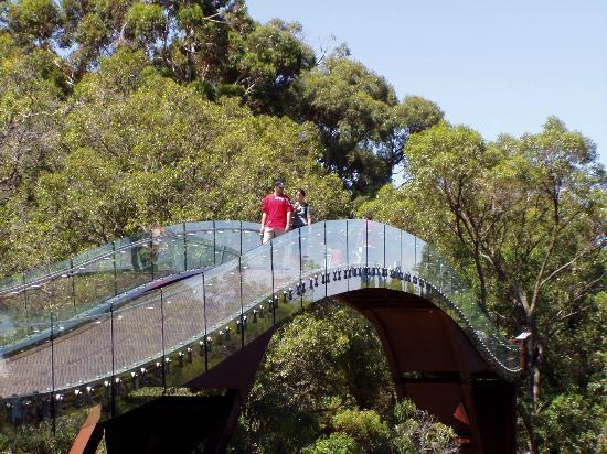 Lotterywest Federation Walkway: Walking over the bridge