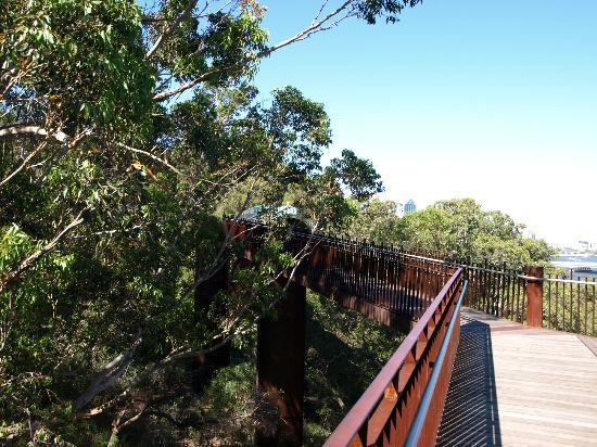 Lotterywest Federation Walkway: Walking through the trees