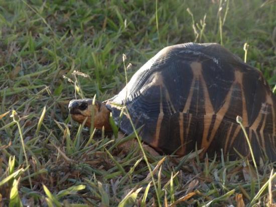 Le Relais de la Reine : tortoise