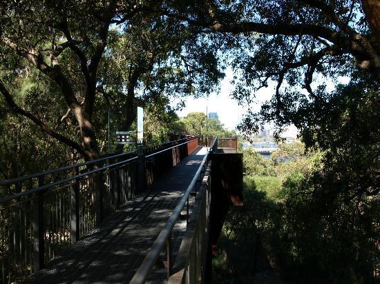 Lotterywest Federation Walkway: Wandering through the trees