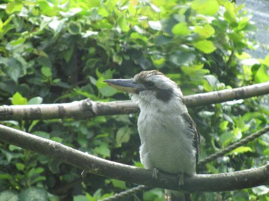 Golders Hill Park: animal enclosure