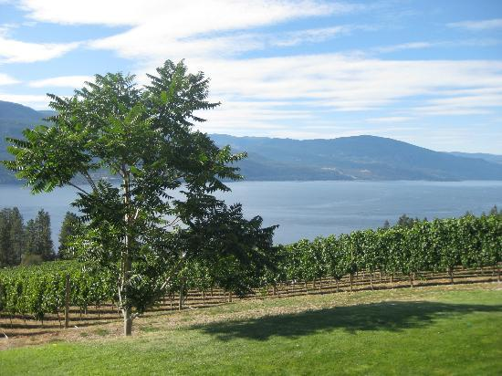 Arrowleaf Cellars : view from the winery