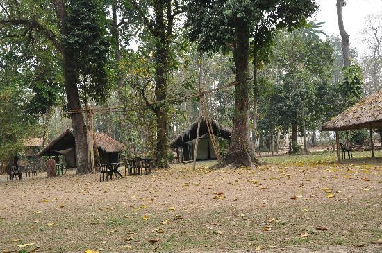 Nameri Eco Camp: The camp site