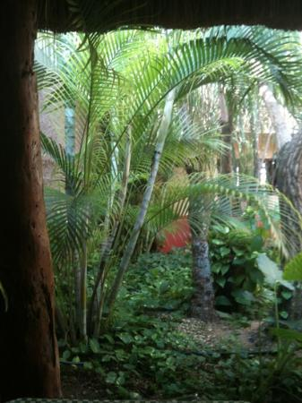 Barrio Latino Hotel : giardino dalla sala colazioni