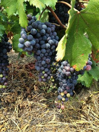 La Lignenga: tra le vigne