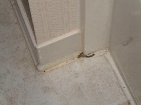 Hampton Inn St. Petersburg: Dirt on the Floor by the Tub