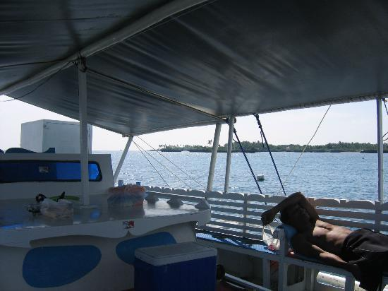 Kontiki Divers: Mactan Island from Plantation Reef