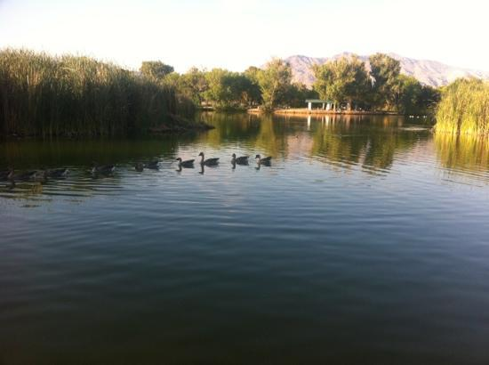 Floyd lamb state park las vegas all you need to know for Floyd lamb park fishing