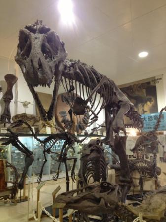 The Museum @ Black Hills Institute: T-Rex!