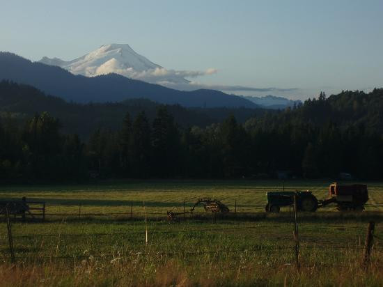Ovenell's Heritage Inn: View of Mount Baker from Ovenell's Grounds