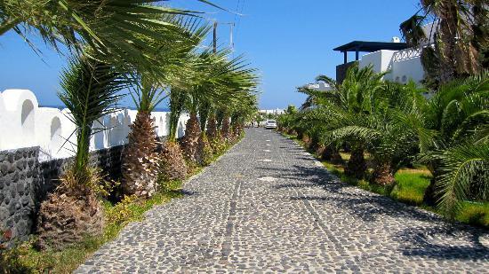 ميدترينيان رويال: L'allée des palmiers 