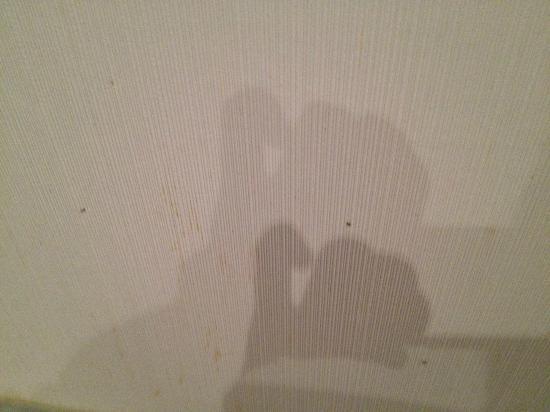 Apartamentos Coronado: En esta foto lo que es son hormigas corriendo por las paredes, y el papel lleno de mierda