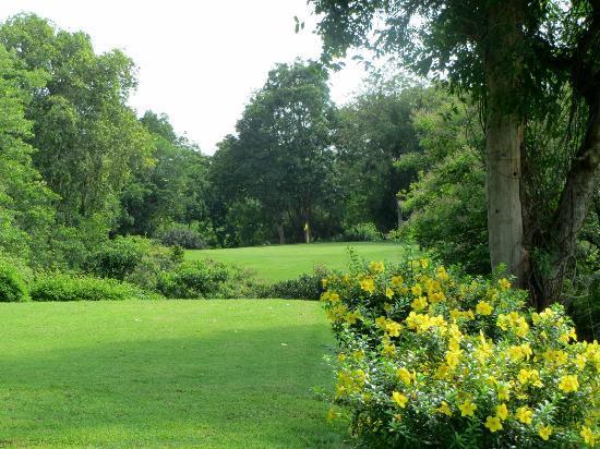 Royal Hua Hin Golf Club: 大きく育った樹木の影に入ると、心地良い風がきた