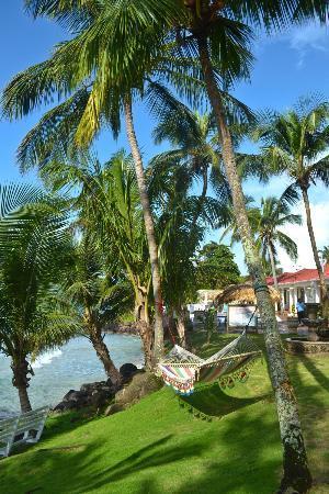 Casa Canada: Shady ocean-front hammocks