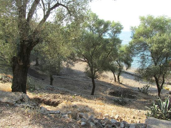 Ece Boutique Hotel: Olive Groves on the Island