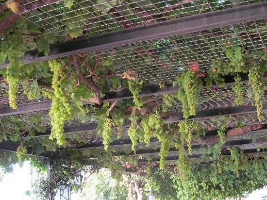 Ece Boutique Hotel: Grape Vines in Bar area