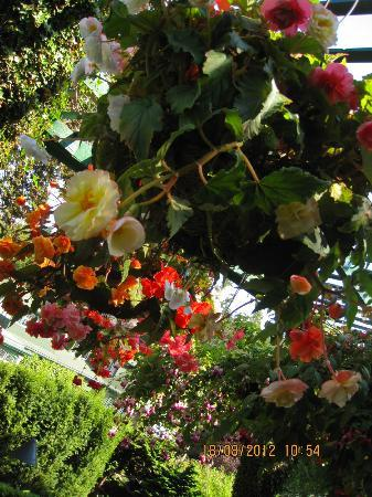 The Butchart Gardens: Butchart Gardens