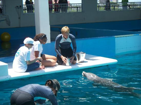 Clearwater marine aquarium discount coupons