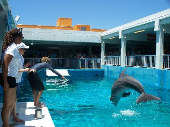 Feeding Time Picture Of Clearwater Marine Aquarium