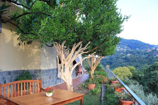 Creuza de ma : il tavolo della colazione tra alberi di agrumi...