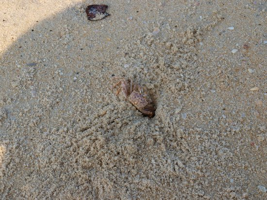 marari beach - crab....loads of them scurrying in and out