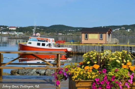 Whale & iceberg tour located within walking distance from Hillside B&B