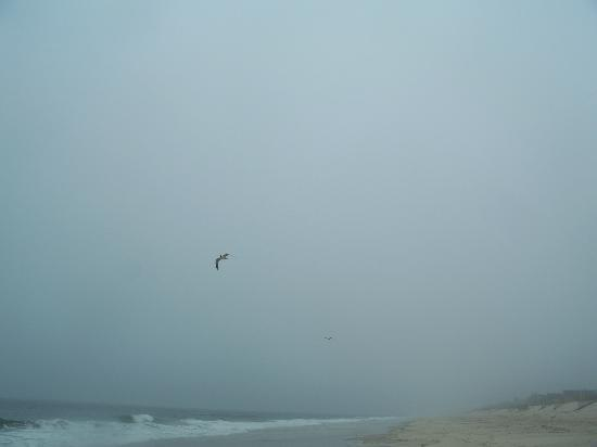 Mantoloking, NJ: Lone gull