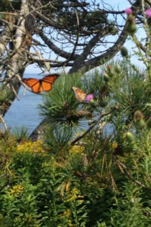 Eagle Island State Park: Magical...