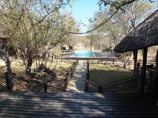 ‪‪Toro Yaka Bush Lodge‬: The pool and animal viewing