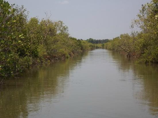 Pichavaram Mangrove Forest : waterway