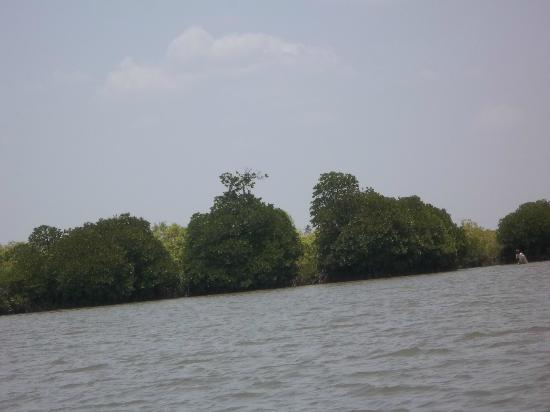 Pichavaram Mangrove Forest: Bushy forest