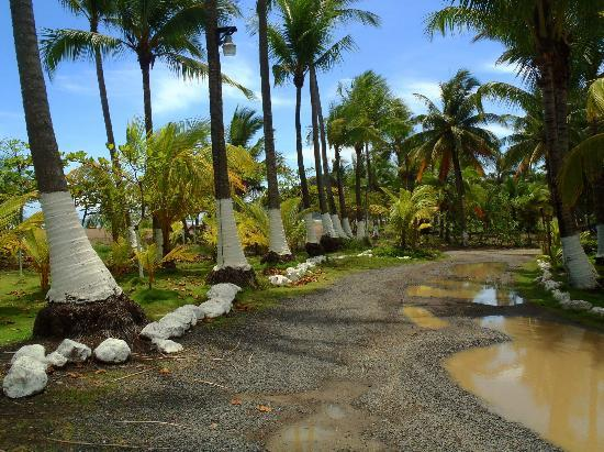 Copacabana Hotel & Suites : Palm grove and driveway in front of hotel.