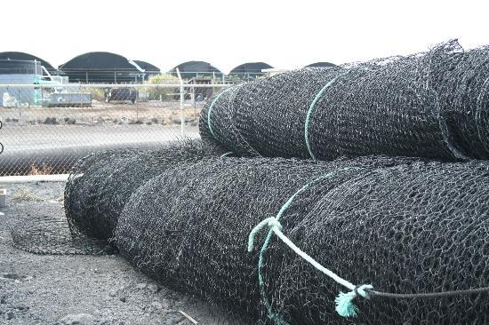 Friends of NELHA: Fish nets at fish farm