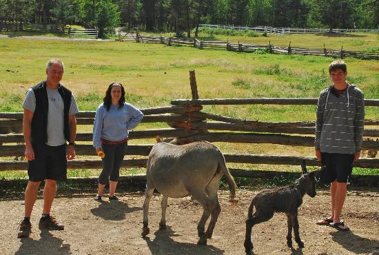 Spruce Hill Resort & Spa: We witnessed the birth of a donkey!