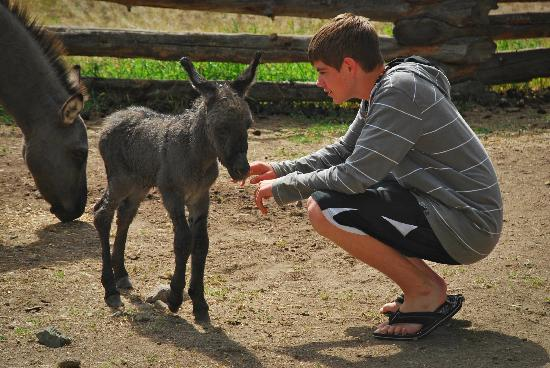 Spruce Hill Resort & Spa: Baby Donkey and our teenage son